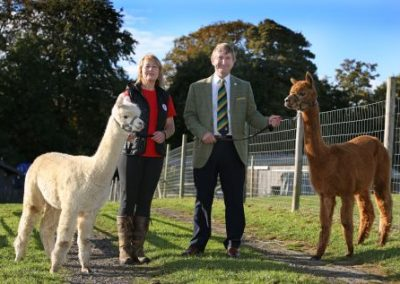 Countryside Live Alpacas
