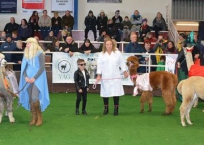 yorkshire-alpaca-group-show-2018 (5)